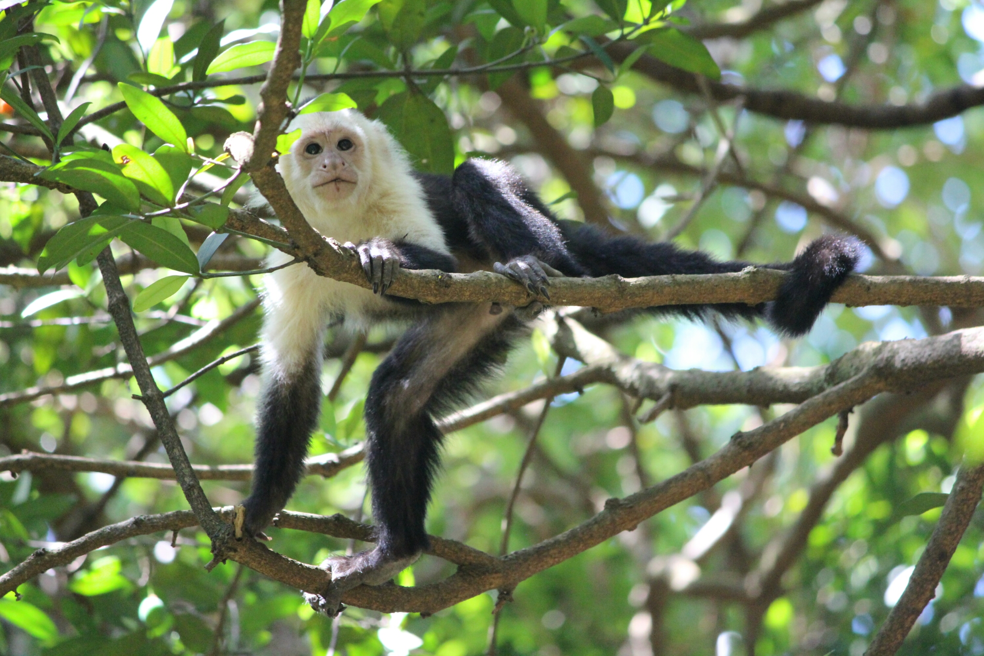 La faune du parc Rincon de la Vieja