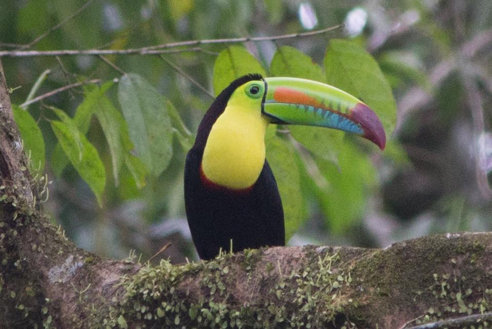 Costa Rica coté Caraibe