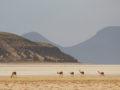 From La Paz to Salar d'Uyuni